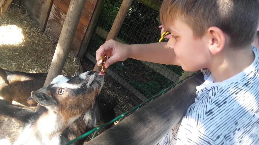 Un apr s midi au zoo pour les d couvreurs les maisons - Maison des enfants de la cote d opale ...