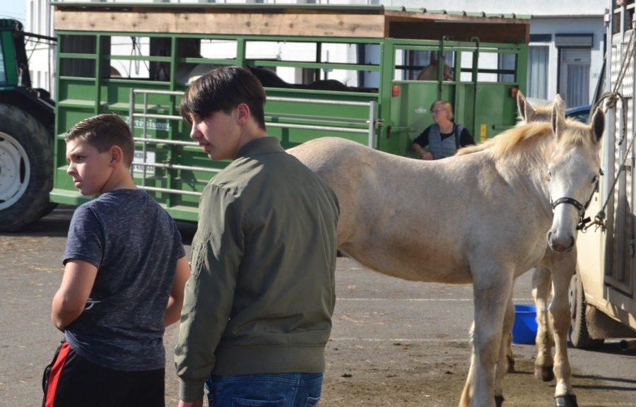 A la rencontre des chevaux boulonnais les maisons des - Maison des enfants de la cote d opale ...