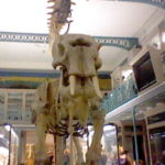 musée lille (5)