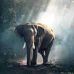 elephant-Asie