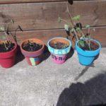 La vie de foyer !! Comment ça se passe depuis le confinement ? :  Les jeunes plantes ont trouvés pots à leur pieds  (épisode 60)