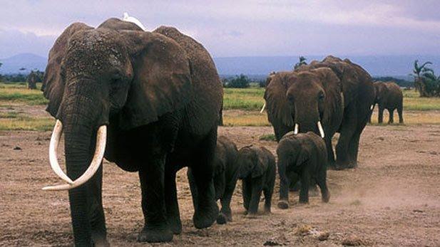 echo_nature_elephants_echo