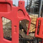 """De la part de Luna et Maki : """"Centre d'observation des éléphants de chantier de Londres"""" (épisode 1)"""