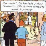 """Lettre de Shila : """"Les vaches sacrées"""""""