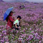"""Lettre de Shila : """"La fleur neelakurinji qui fleurit une fois tous les 12 ans"""""""