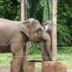 """Lettre de Shila : """"Le droit des animaux et l'éléphante Happy"""""""