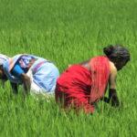 """Lettre de Shila : """"De la révolution verte à l'agriculture biologique,  l'Andhra Pradesh a choisi"""""""