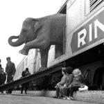 """Lettre de Shila : """"Des trains pas comme les autres"""""""