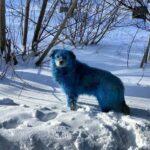 """Lettre de Shila : """"Kind of Blue (entre chien et loup)"""""""