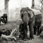 """Lettre de Shila : """"""""Grand-père avait un éléphant"""" (histoires d'héritages)"""""""